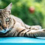 Dónde poner el arenero del gato en casa: Claves