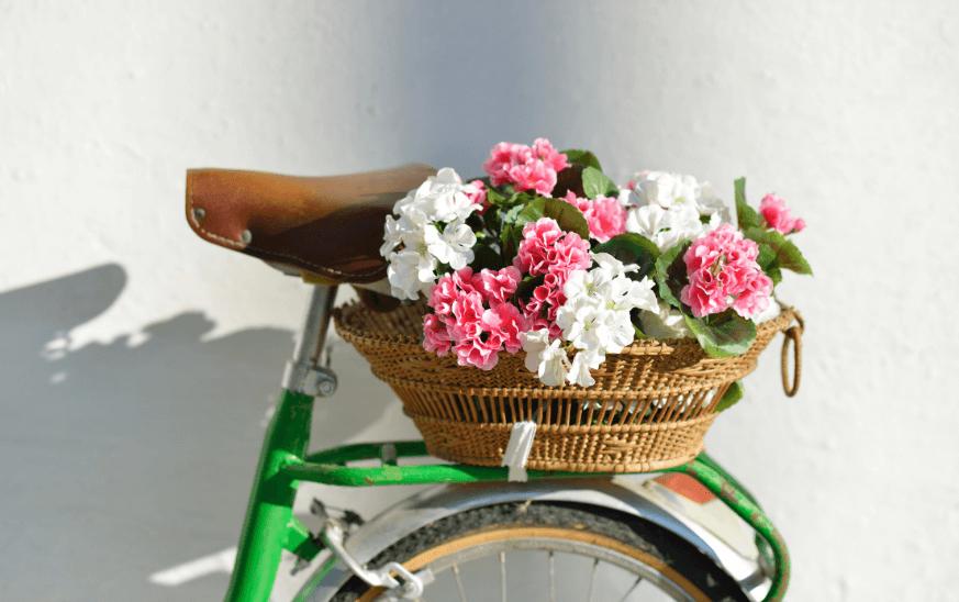 Gerenios en una cesta de bicicleta, plantas de exterior resistentes para terrazas