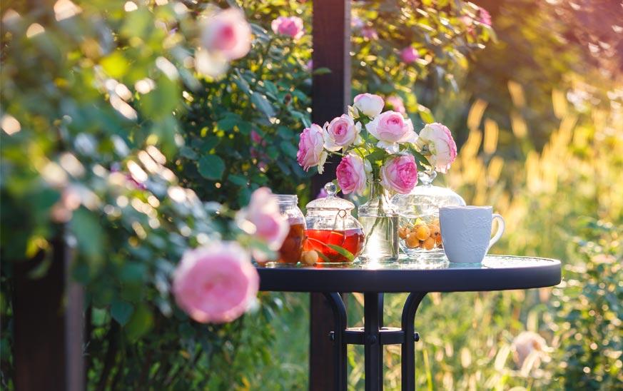 Rosal en jardñin o terraza junto a mesa con té